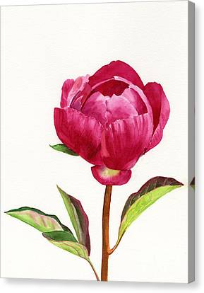 Red Peony With Leaves Canvas Print by Sharon Freeman