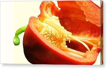 Red Pepper Seeds Canvas Print