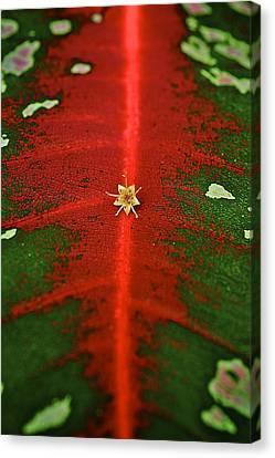 Red Pigment Canvas Print by Arj Munoz