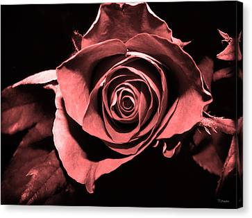 Red Pink Rose  Canvas Print