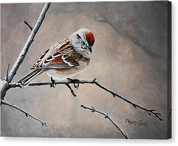 Red Poll Canvas Print by Pam Kaur