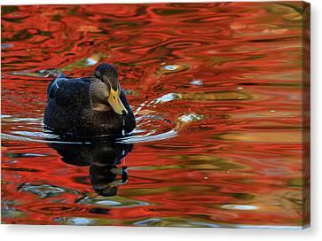 Red Pond Canvas Print by Karol Livote
