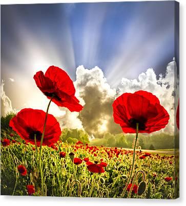 Red Poppies Canvas Print by Debra and Dave Vanderlaan