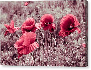 red poppies II Canvas Print by Hannes Cmarits