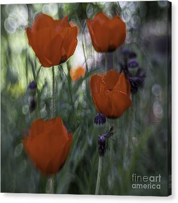 Red Poppies Canvas Print by Jean OKeeffe Macro Abundance Art