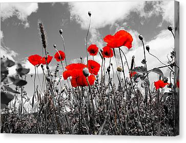 Canvas Print featuring the photograph Red Poppies On Black And White Background by Dany Lison