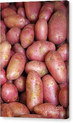 Red Potatoes Canvas Print by Carlos Caetano
