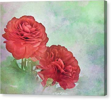 Red Ranunculus Canvas Print by David and Carol Kelly