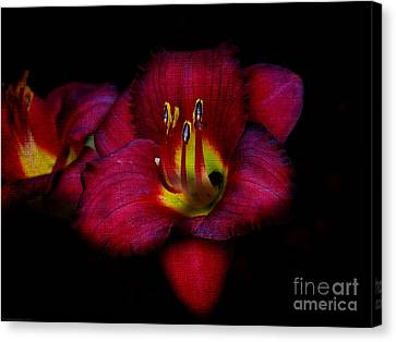Red Red Lily Canvas Print by Gena Weiser