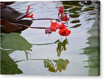 Red Reflection  Canvas Print by Sonali Gangane