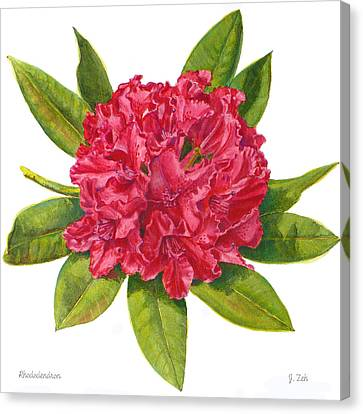 Red Rhododendron  Canvas Print