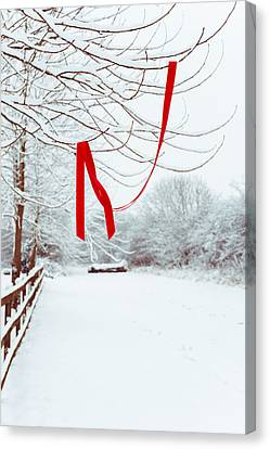 Red Ribbon In Tree Canvas Print by Amanda Elwell
