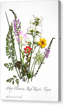 Red River May Flowers Canvas Print