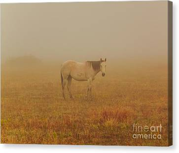 Red Roan In Mist Canvas Print by Robert Frederick