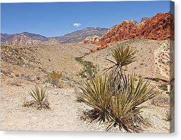Red Rock Canyon Nevada. Canvas Print by Gino Rigucci