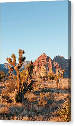 Red Rock Canyon Outside Las Vegas Canvas Print by Michael Defreitas