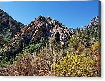 Red Rock Canyon With Foliage Canvas Print by Judy Vincent