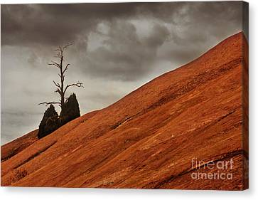 Canvas Print featuring the photograph Red Rock by Dana DiPasquale