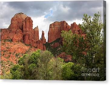 Red Rocks Of Sedona With Spring Trees Canvas Print