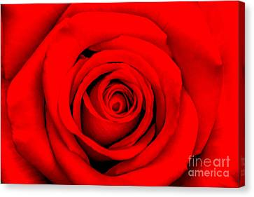 Centre Canvas Print - Red Rose 1 by Az Jackson