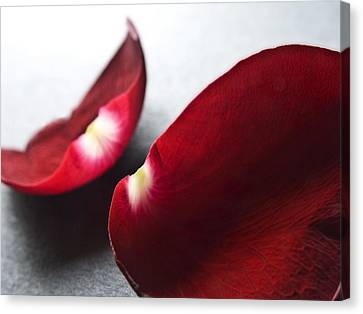 Red Rose Flower Petals Abstract II - Closeup Flower Photograph Canvas Print by Artecco Fine Art Photography