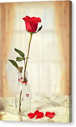 Red Rose In Bottle Canvas Print