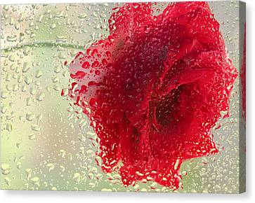 Red Rose In The Rain Canvas Print by Don Schwartz