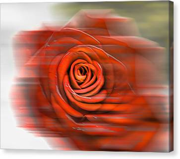 Canvas Print featuring the photograph Red Rose by Leif Sohlman