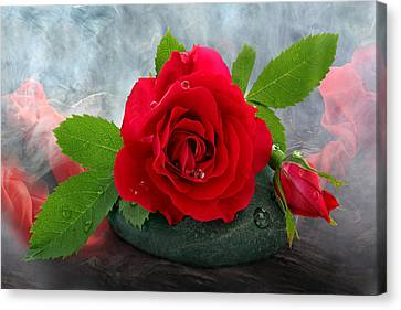 Red Rose Canvas Print by Manfred Lutzius