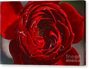 Red Rose Canvas Print by Nur Roy