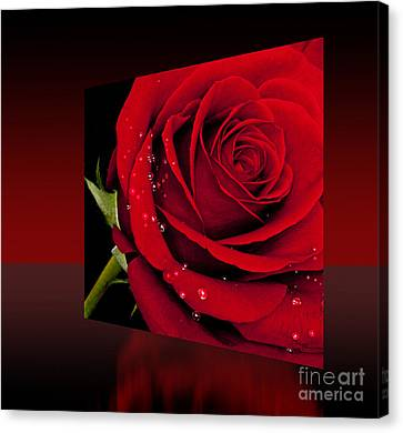 Canvas Print featuring the photograph Red Rose by Shirley Mangini