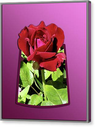 Red Rose Canvas Print by Thomas Woolworth