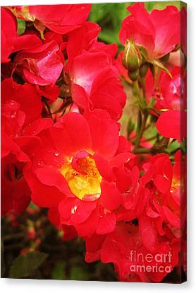 Red Roses And Raindrops Canvas Print by Margaret Newcomb