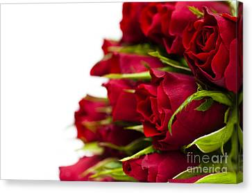 Red Roses Canvas Print by Anne Gilbert
