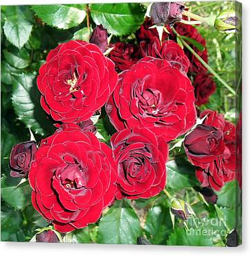 Canvas Print featuring the photograph Red Roses by Vesna Martinjak