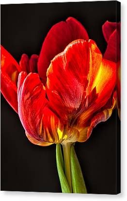 Red Ruffles Canvas Print
