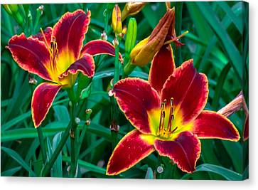 Red Rum Daylilies Canvas Print