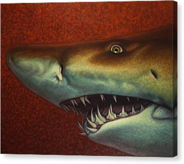 Red Sea Shark Canvas Print by James W Johnson