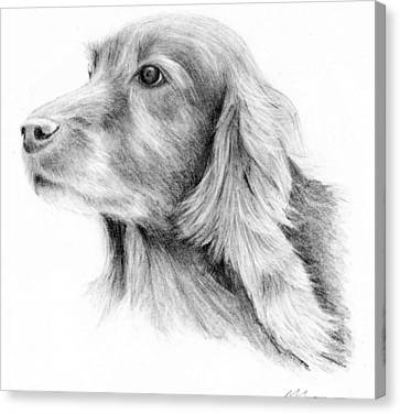 Red Setter Canvas Print by Mary Mayes