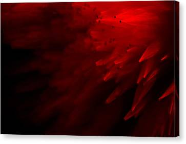 Canvas Print featuring the photograph Red Skies by Dazzle Zazz