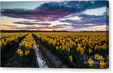 Red Skies In The Valley Canvas Print