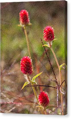 Red Spiky Flowers Canvas Print by Karen Stephenson