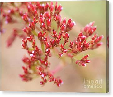 Red Sprinkles Canvas Print by Irina WardasTiny Red Sprinkles