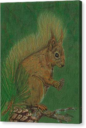 Red Squirrel Canvas Print by Stephanie Grant