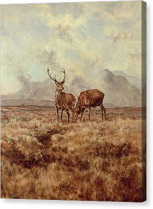 Red Stags, Ben Buie Canvas Print by Tim Scott Bolton