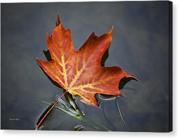 Red Sugar Maple Leaf Canvas Print by Christina Rollo