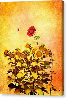 Red Sunflower Canvas Print by Bob Orsillo