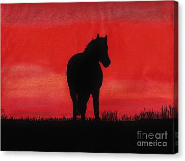 Red Sunset Horse Canvas Print by D Hackett