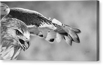 Red Tail Canvas Print by Doug Comeau