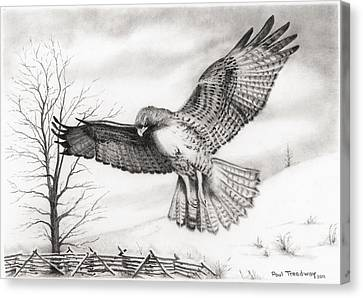 Red Tail Hawk Canvas Print by Paul Treadway